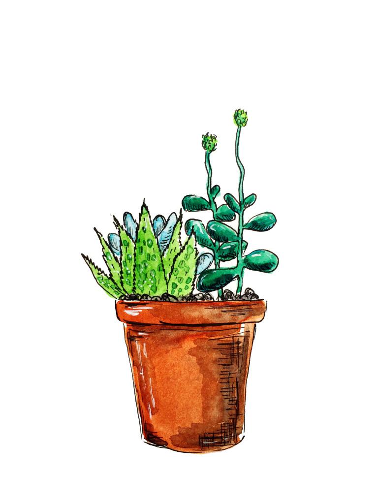 succulents_printable_OlyaSchmidt